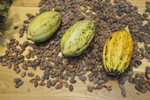 cocoa-beans-373813_960_720-pixabay